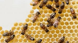 Le sort des abeilles Ku-xlarge