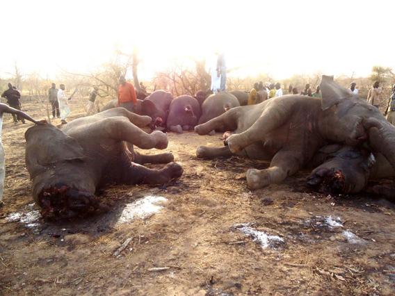 SOS_Elephants_Mars_2013_.2.568