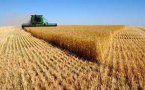 L'Ukraine, grenier à blé entre Europe et Russie